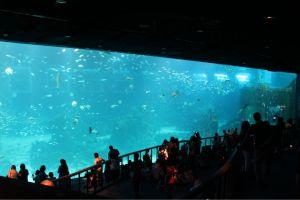 guiness world largest aquarium